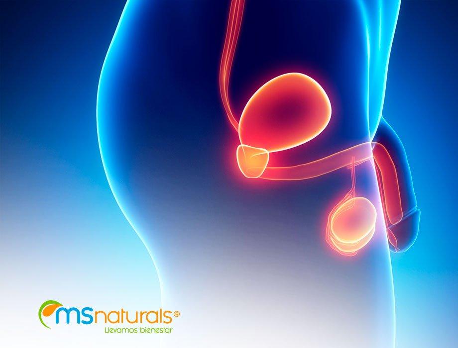 Prostata y sistema urinario